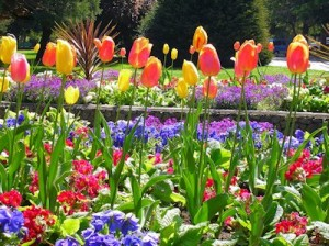 victoria_spring_beaconhill
